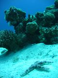 Blue reef. In eilat corals preserve + sea star Royalty Free Stock Photography