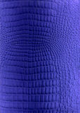 Blue reptile leather imitation texture Royalty Free Stock Images