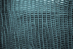 Blue reptile leather texture background Stock Photos
