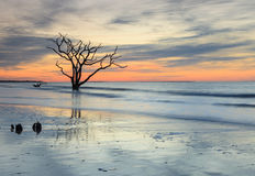 Blue Reverence Charleston SC Ocean Sunrise. The skeleton of a once thriving tree, having withstood the ravages and assaults of the Atlantic Ocean, provokes a Royalty Free Stock Photography