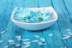 Blue rhapsody. Blue flowers composition in a white pot on blue background Royalty Free Stock Photos