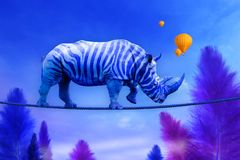Blue Rhino walking on rope stock photography