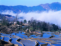 Blue rice terraces of yuanyang Stock Photography