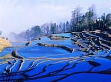 Blue rice terraces of yuanyang. Ancient rice terraces of yuanyang, yunnan, china Royalty Free Stock Images