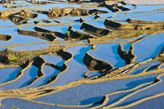 Blue rice terraces of yuanyang Stock Photos