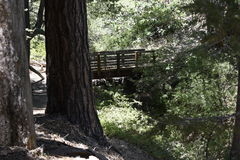 Blue Ridge hiking trail Royalty Free Stock Image