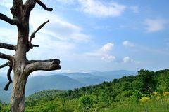 Blue Ridge mountain Scene - Foreground dead tree. Mountains in Shenandoah National Park Royalty Free Stock Images