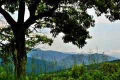 Blue Ridge mountain Scene -Foreground Tree. Mountains in Shenandoah National Park Stock Photos