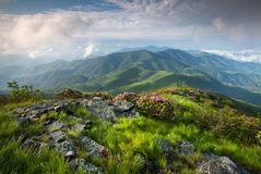 Blue Ridge Mountain Scenic with Pink Rhododendron Stock Photography