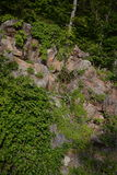Blue Ridge Mountains Cliff with Roses. Stock Photography