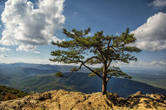 Blue Ridge Mountains from Ravens Roost Overlook Royalty Free Stock Photography