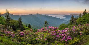 Blue Ridge Mountains, Rhododendron, sunrise. Morning over the Blue ridge Mountains in Western North Carolina. Taken along the Blue Ridge parkway. Blooming royalty free stock images