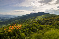 Blue Ridge Mountains Flowers Spring Landscape Stock Photos