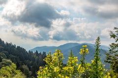 Blue Ridge Mountains Stock Images