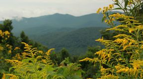 Blue Ridge Mountains. Yellow wild flowers frame part of the Blue Ridge Mountains of South Carolina, U.S.A Royalty Free Stock Photography