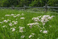 Blue Ridge Parkway, summer, split rail fence Stock Photo