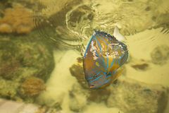 Blue ring angelfish Marine fish.Pomacanthus annularis .Blue ring. Blue ring angelfish Pomacanthus annularis . Marine fish royalty free stock photo