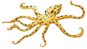 Blue-ringed octopus royalty free illustration