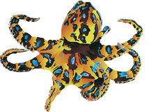 Blue-Ringed Octopus Royalty Free Stock Image