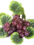 Blue ripe bunch of grapes Stock Photography