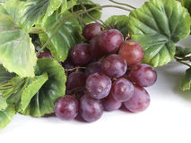 Blue ripe bunch of grapes Royalty Free Stock Photography