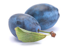 Blue ripe plum Royalty Free Stock Photos
