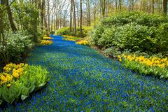 A blue river in the forest, formed from flowers. Royalty Free Stock Photo