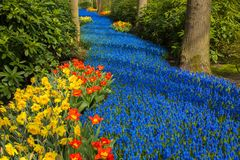 A blue river in the forest, formed from flowers. Royalty Free Stock Photos