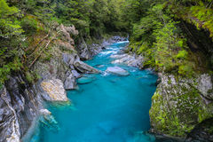 Blue river in the forest, New Zealand Royalty Free Stock Image