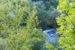 Blue river . Stock Photos