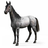 Blue Roan horse on a white background. 3d rendering Stock Images