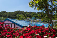 Blue roof and red flowers in gamcheon culture village. View of blue roof and red flowers in gamcheon culture village at Busan stock images