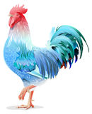 Blue Rooster symbol 2017 by Chinese calendar. Isolated on white vector illustration Stock Images