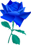 Blue rose. Roses in shades of blue Royalty Free Stock Images