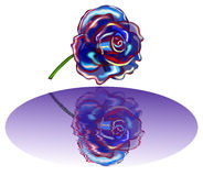 blue rose Obrazy Stock