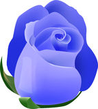Blue rose Royalty Free Stock Photography
