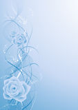 Blue rose bacground Royalty Free Stock Photography