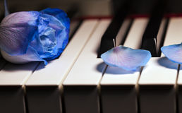 Blue Rose and Candle on Piano Keys Royalty Free Stock Photos