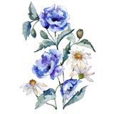 Blue rose and daisy flowers bouquet on white background. Watercolor illustration set. Isolated illustration element. royalty free illustration