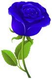 Blue rose on green stem Royalty Free Stock Photos