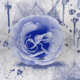 Blue rose  grunge Royalty Free Stock Image