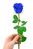 Blue rose in hand Royalty Free Stock Photos