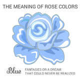 Blue rose Stock Images