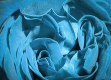 Blue rose. Royalty Free Stock Photo