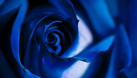 Blue rose. Macro view of a blue rose, studio Royalty Free Stock Photography