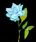 Blue Rose, painting Stock Image