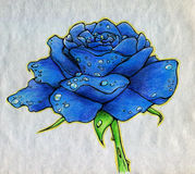Blue rose on rough paper. Blue rose covered with droplets of dew. Hand drawn image made with colored pencils (crayons) on rough paper Royalty Free Stock Photo