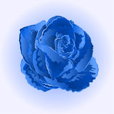 Blue rose simple vector Stock Photos