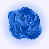 Blue rose simple vector Stock Photos
