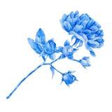 Blue rose vector illustration